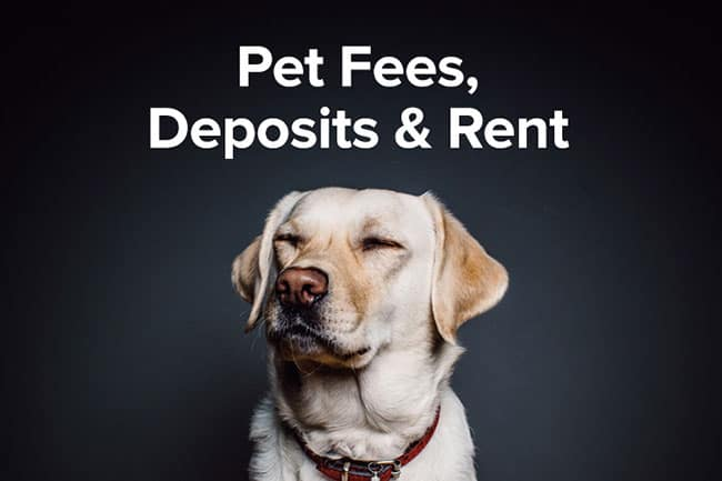 Extra pet fees and pet deposits - Hanoi housing