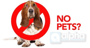 No pets allowed? What you need to know about pets & rentals ...